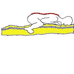 spine3.jpg (10671 bytes)